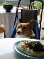 dogcafe1024.jpg